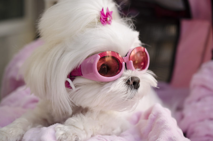 Nomi Cani Femmine Nomi Per Cani