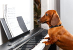 funny-dog-playing-the-piano-358934735.jpg