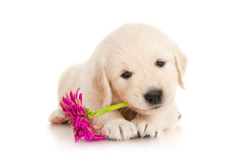 Nomi Cani Bianchi Nomi Per Cani